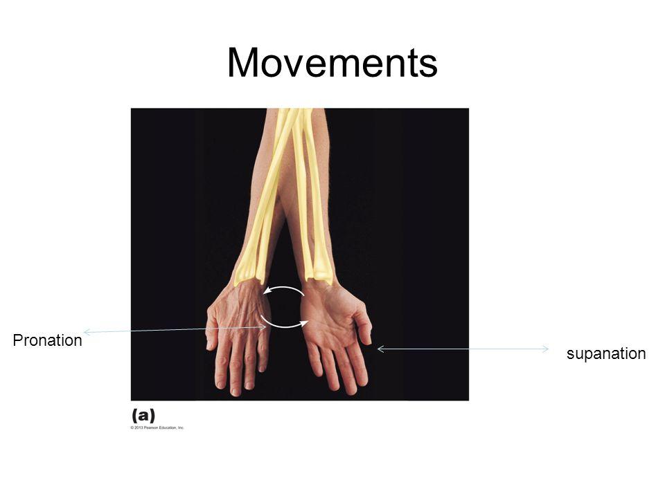 Movements Pronation supanation
