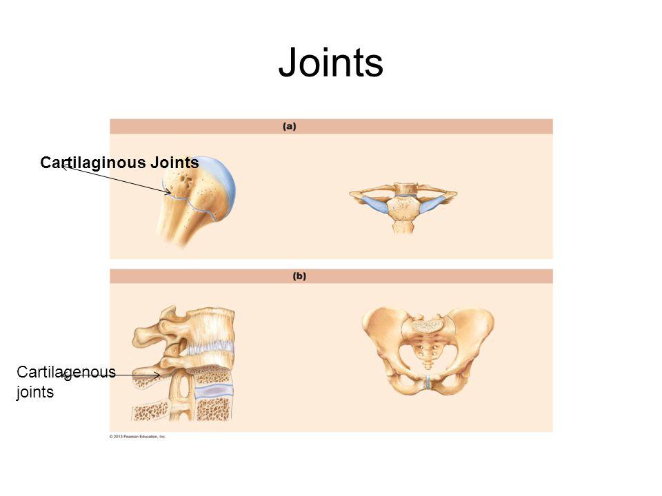 Joints Cartilagenous joints Cartilaginous Joints