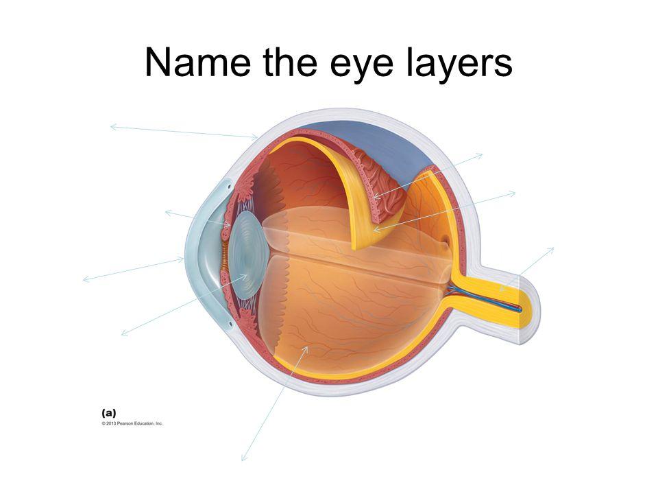 Name the eye layers