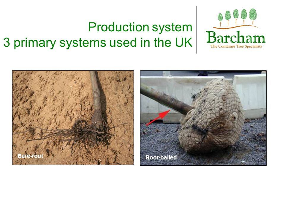 Root-balled Bare-root Production system 3 primary systems used in the UK
