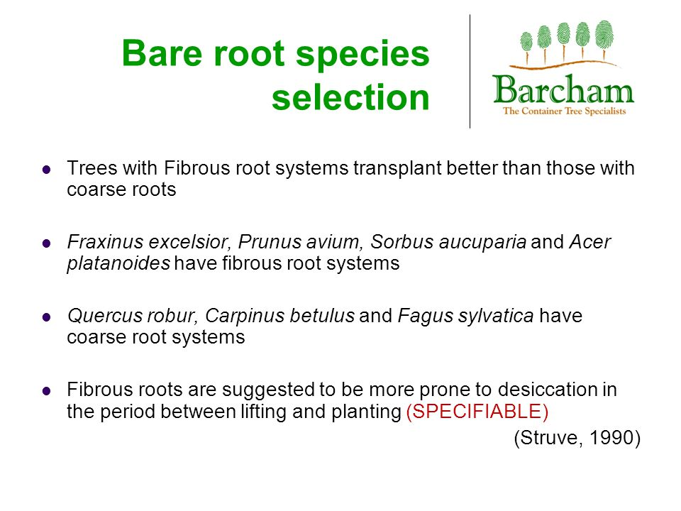 Bare root species selection Trees with Fibrous root systems transplant better than those with coarse roots Fraxinus excelsior, Prunus avium, Sorbus aucuparia and Acer platanoides have fibrous root systems Quercus robur, Carpinus betulus and Fagus sylvatica have coarse root systems Fibrous roots are suggested to be more prone to desiccation in the period between lifting and planting (SPECIFIABLE) (Struve, 1990)