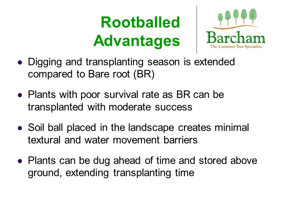 Rootballed Advantages Digging and transplanting season is extended compared to Bare root (BR) Plants with poor survival rate as BR can be transplanted