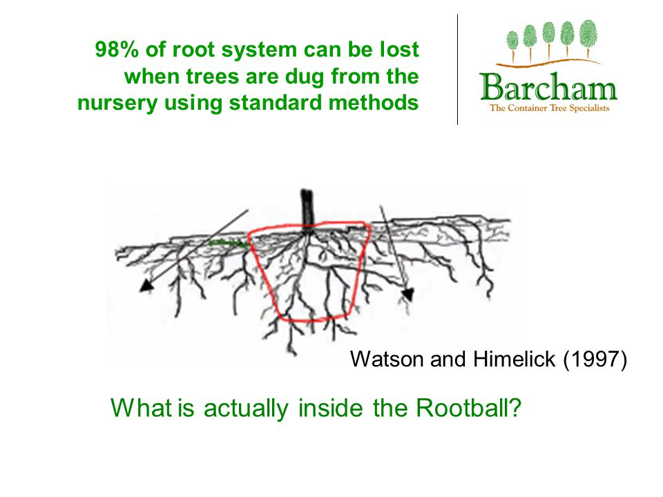 98% of root system can be lost when trees are dug from the nursery using standard methods Watson and Himelick (1997) What is actually inside the Rootb