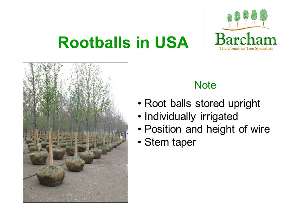Rootballs in USA Note Root balls stored upright Individually irrigated Position and height of wire Stem taper