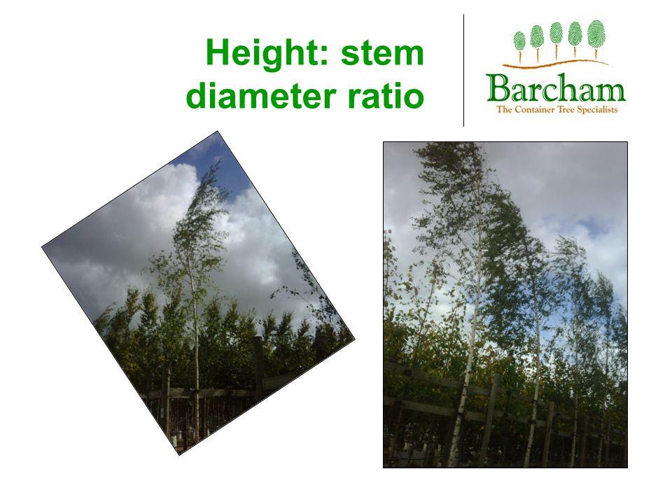 Height: stem diameter ratio
