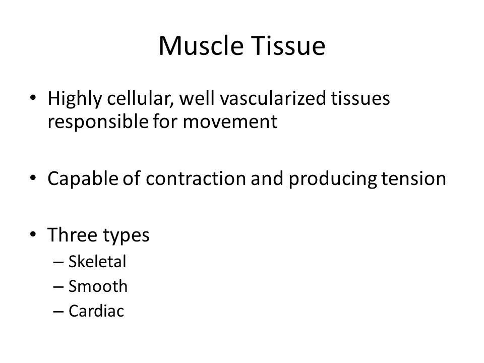 Muscle Tissue Highly cellular, well vascularized tissues responsible for movement Capable of contraction and producing tension Three types – Skeletal – Smooth – Cardiac