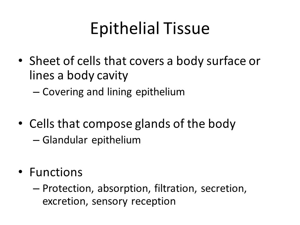 Epithelial Tissue Sheet of cells that covers a body surface or lines a body cavity – Covering and lining epithelium Cells that compose glands of the body – Glandular epithelium Functions – Protection, absorption, filtration, secretion, excretion, sensory reception