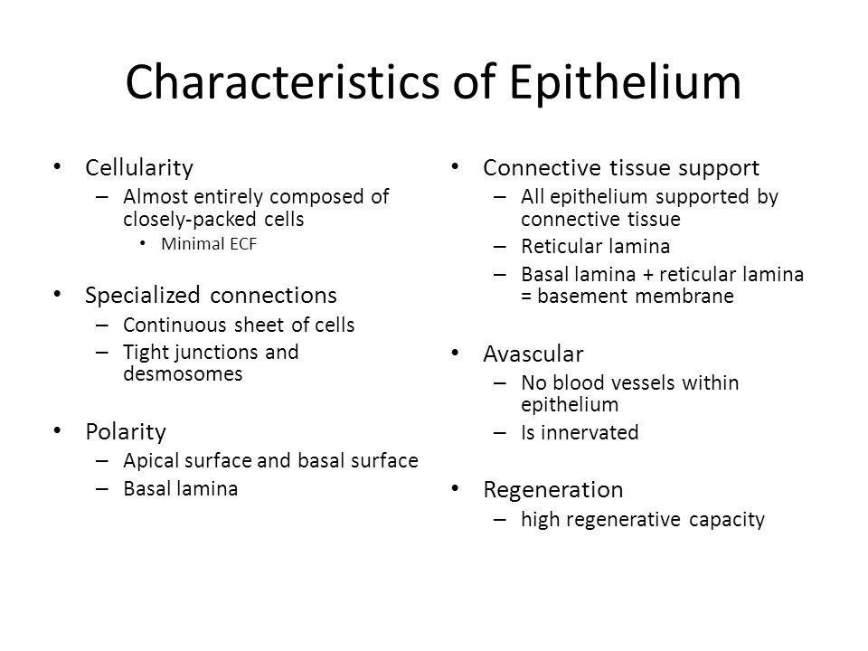 Classification of Epithelium Based on number of cell layers and on cell shape Cell layers – Simple – refers to one layer of cells – Stratified – refers to two or more layers of cells Cell shape – Squamous – flat, scale-like cells – Cuboidal – cube shaped cells – Columnar – column shaped cells How is pseudostratified columnar classified?