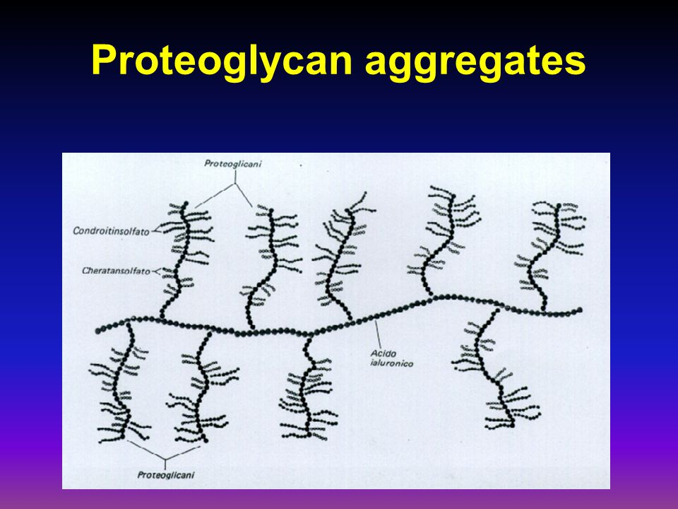 Proteoglycan aggregates