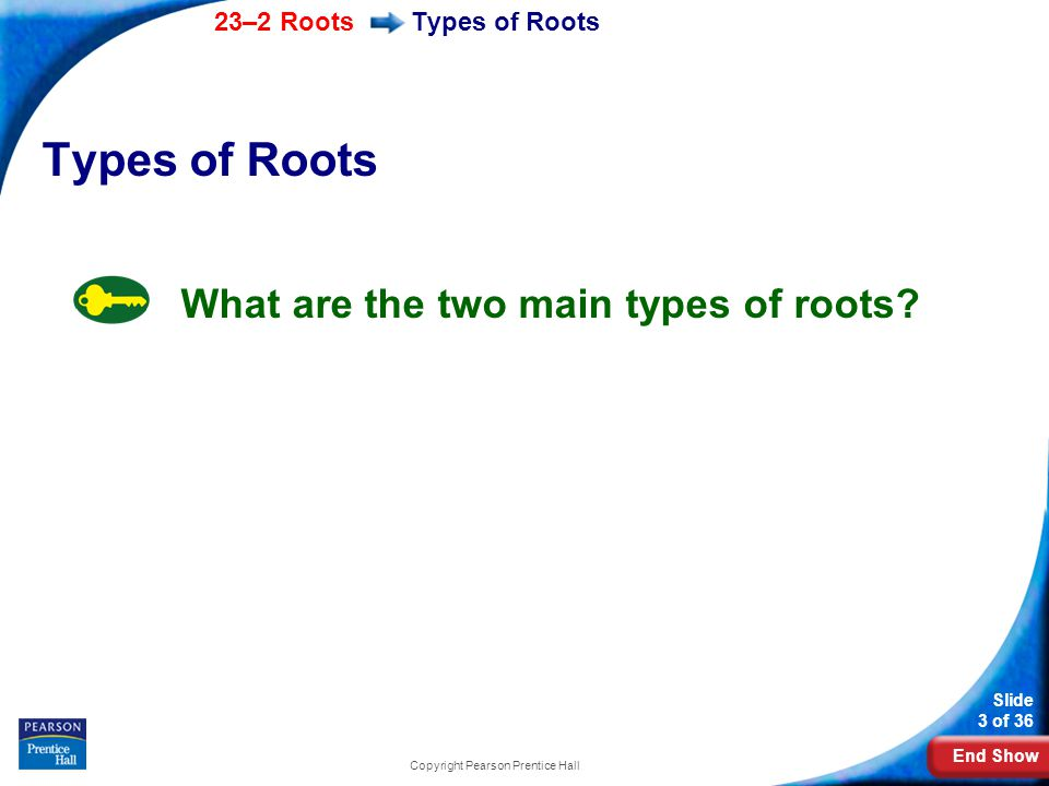 End Show 23–2 Roots Slide 24 of 36 Copyright Pearson Prentice Hall Root Functions Movement Into the Vascular Cylinder Osmosis and active transport move water and minerals from the root epidermis into the cortex.