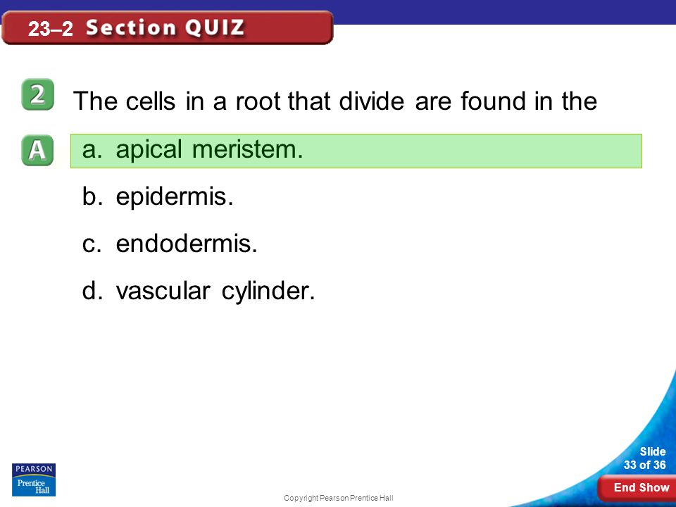 End Show Slide 33 of 36 Copyright Pearson Prentice Hall 23–2 The cells in a root that divide are found in the a.apical meristem.