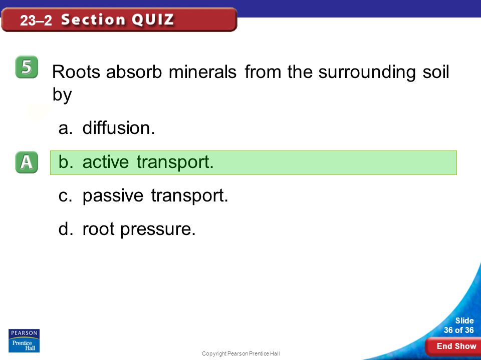 End Show Slide 36 of 36 Copyright Pearson Prentice Hall 23–2 Roots absorb minerals from the surrounding soil by a.diffusion.