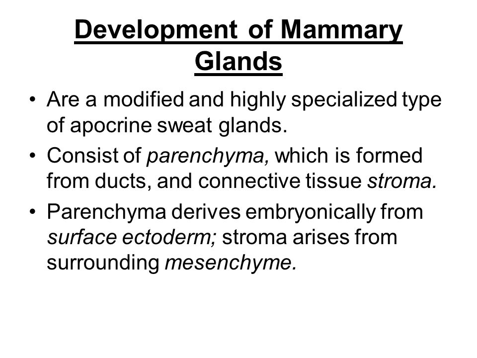 Mammary buds begin to develop during the sixth week as solid downgrowths of the epidermis into the underlying mesenchyme These changes occur in response to an inductive influence from the mesenchyme