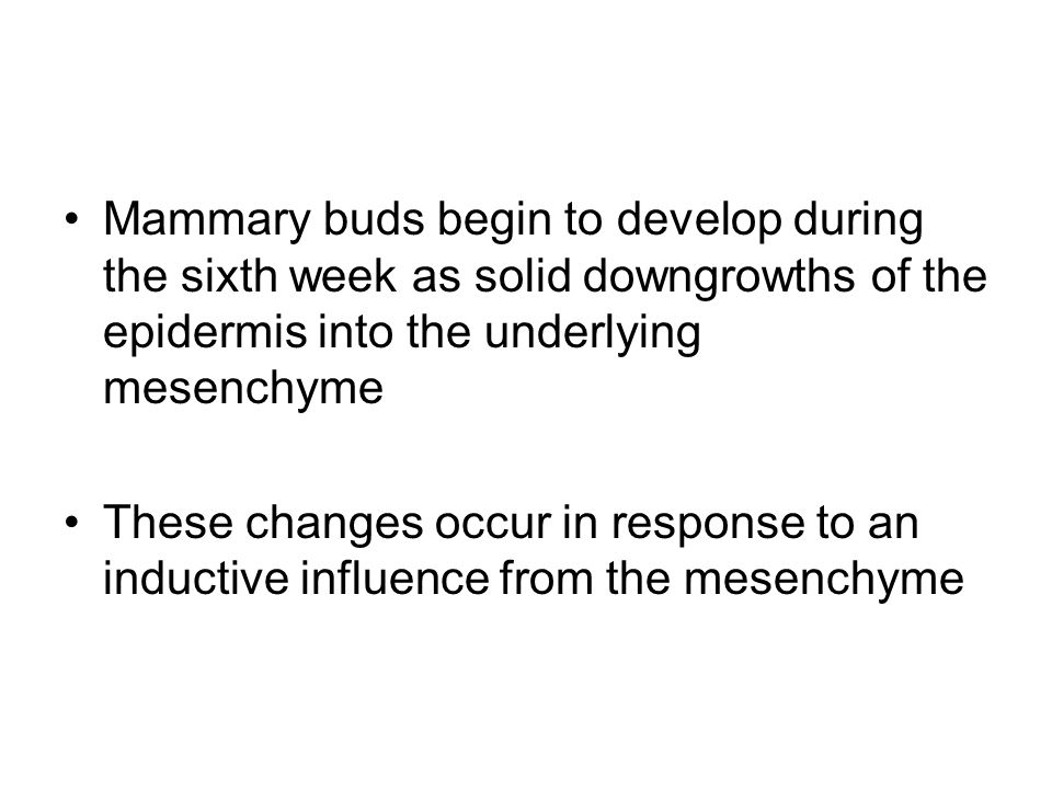 Mammary buds begin to develop during the sixth week as solid downgrowths of the epidermis into the underlying mesenchyme These changes occur in respon