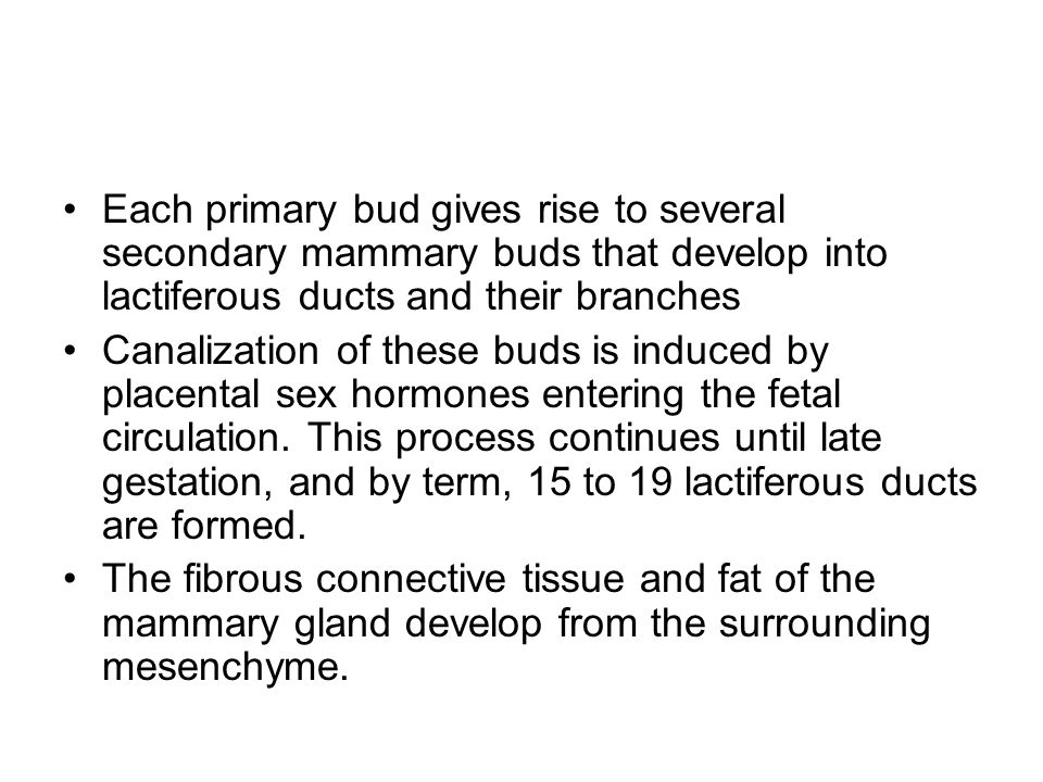 Each primary bud gives rise to several secondary mammary buds that develop into lactiferous ducts and their branches Canalization of these buds is ind