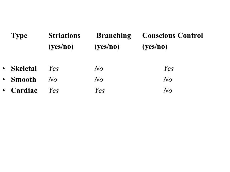 TypeStriations Branching Conscious Control (yes/no) (yes/no) (yes/no) SkeletalYesNoYes SmoothNoNoNo CardiacYesYesNo