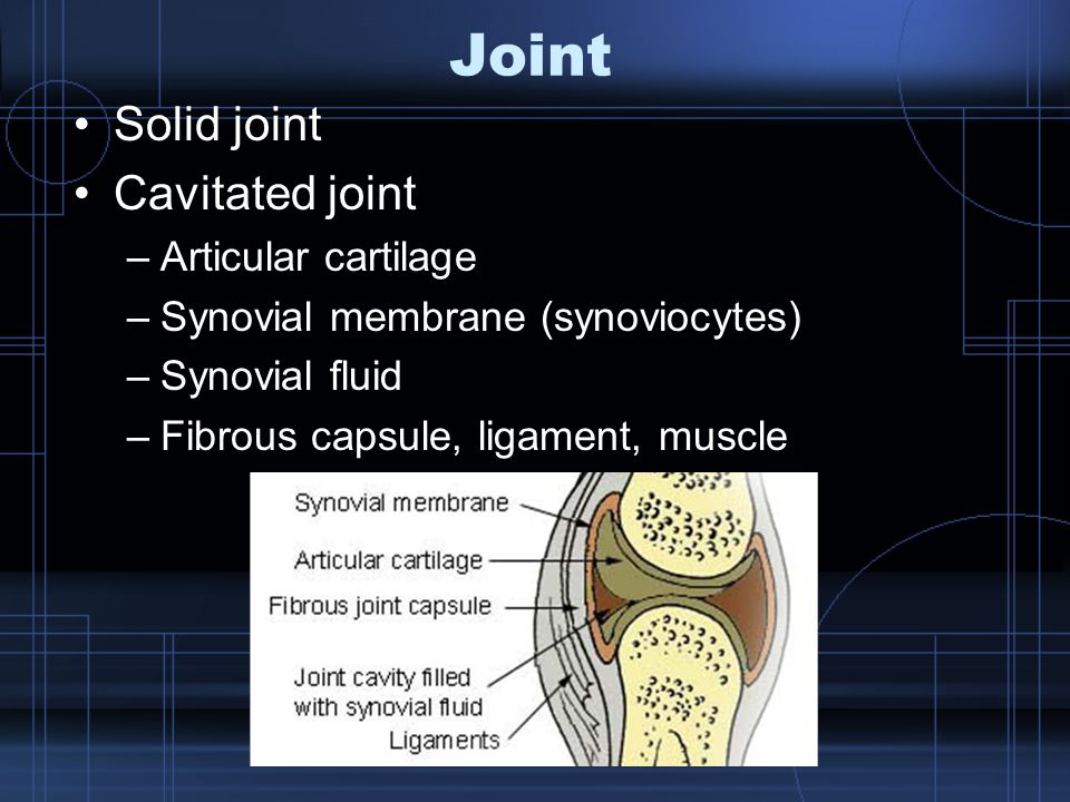 Joint Solid joint Cavitated joint –Articular cartilage –Synovial membrane (synoviocytes) –Synovial fluid –Fibrous capsule, ligament, muscle