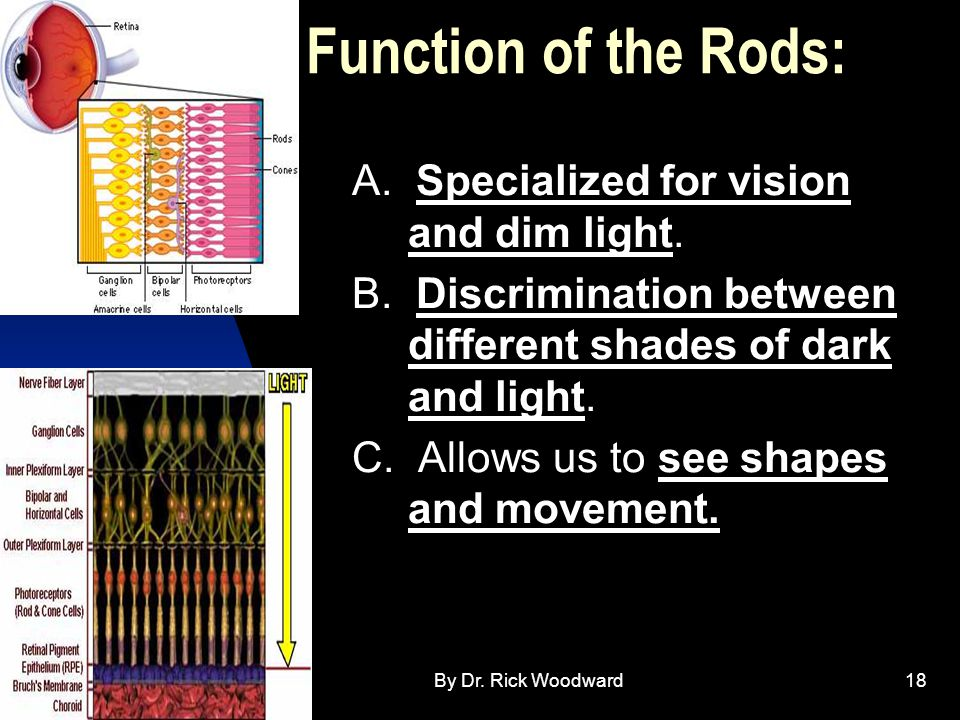 4/30/2015By Dr. Rick Woodward18 Function of the Rods: A.