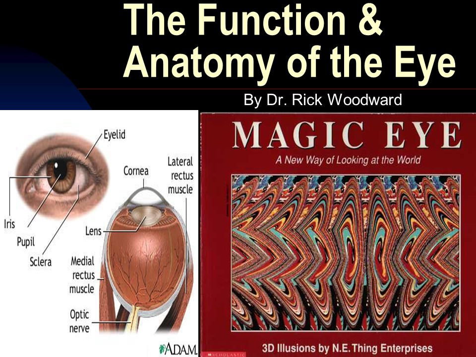 4/30/2015By Dr. Rick Woodward3 The Function & Anatomy of the Eye By Dr. Rick Woodward