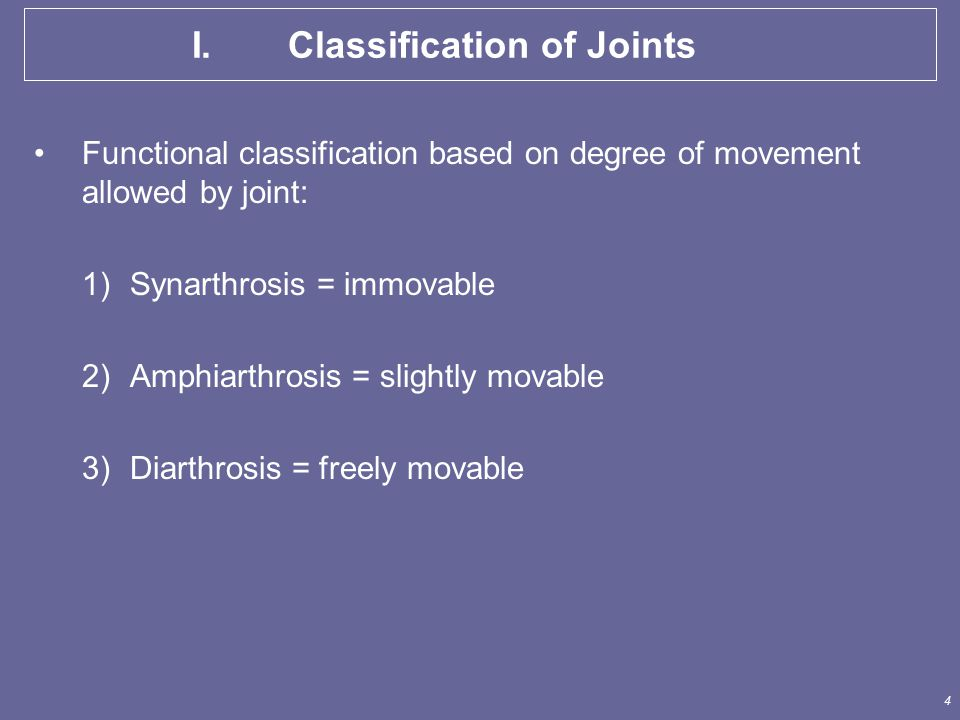5 II.A. Fibrous Joints No synovial cavity Articulating bones held closely together by fibrous C.T.