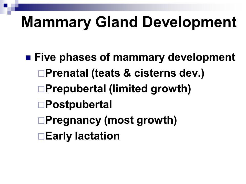 Mammary Gland Development Five phases of mammary development  Prenatal (teats & cisterns dev.)  Prepubertal (limited growth)  Postpubertal  Pregna