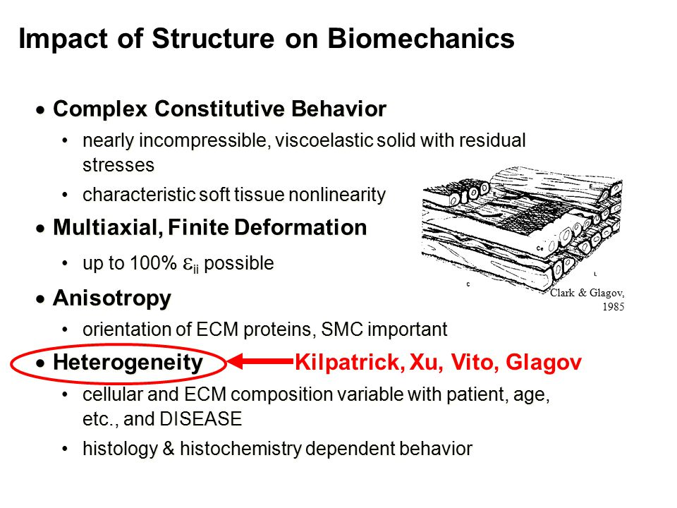  Complex Constitutive Behavior nearly incompressible, viscoelastic solid with residual stresses characteristic soft tissue nonlinearity  Multiaxial, Finite Deformation up to 100%  ii possible  Anisotropy orientation of ECM proteins, SMC important  Heterogeneity cellular and ECM composition variable with patient, age, etc., and DISEASE histology & histochemistry dependent behavior  Complex Constitutive Behavior nearly incompressible, viscoelastic solid with residual stresses characteristic soft tissue nonlinearity  Multiaxial, Finite Deformation up to 100%  ii possible  Anisotropy orientation of ECM proteins, SMC important  Heterogeneity cellular and ECM composition variable with patient, age, etc., and DISEASE histology & histochemistry dependent behavior Clark & Glagov, 1985 Impact of Structure on Biomechanics Kilpatrick, Xu, Vito, Glagov