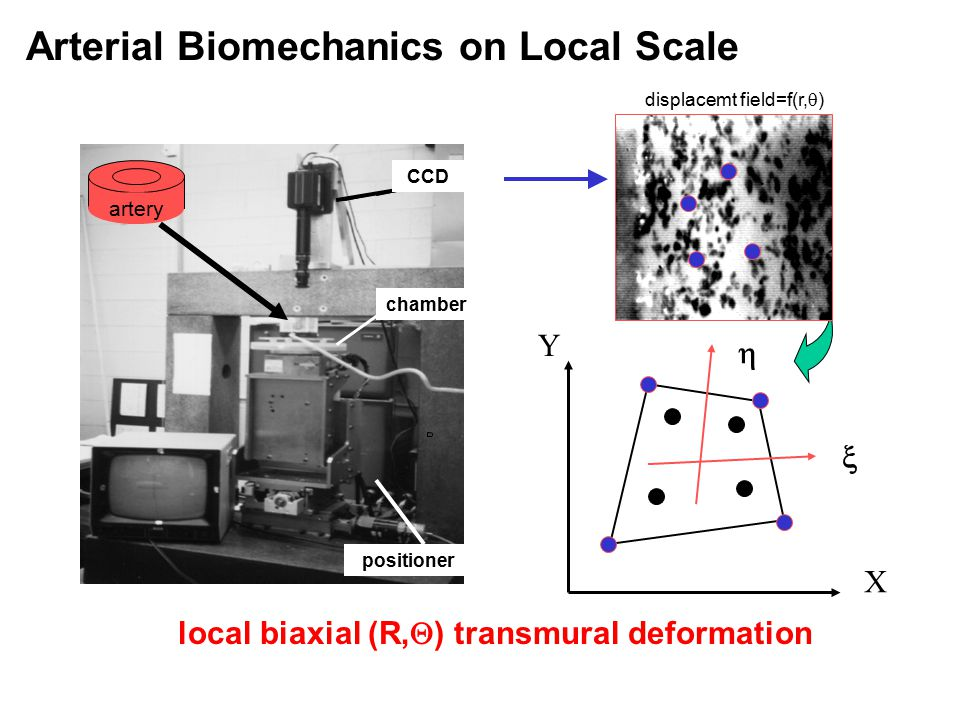 local biaxial (R,  ) transmural deformation Arterial Biomechanics on Local Scale X Y   displacemt field=f(r,  ) positioner artery chamber CCD