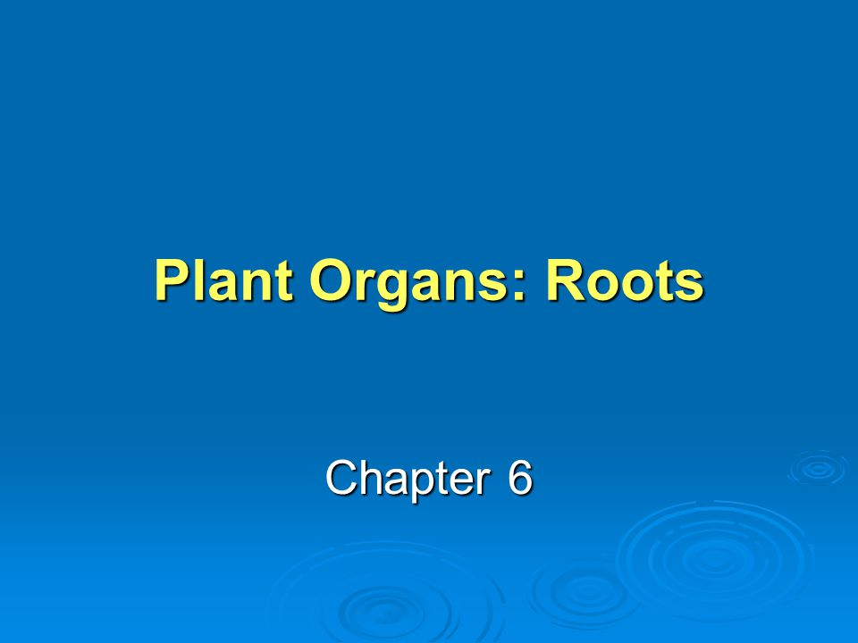 Plant Organs: Roots Chapter 6