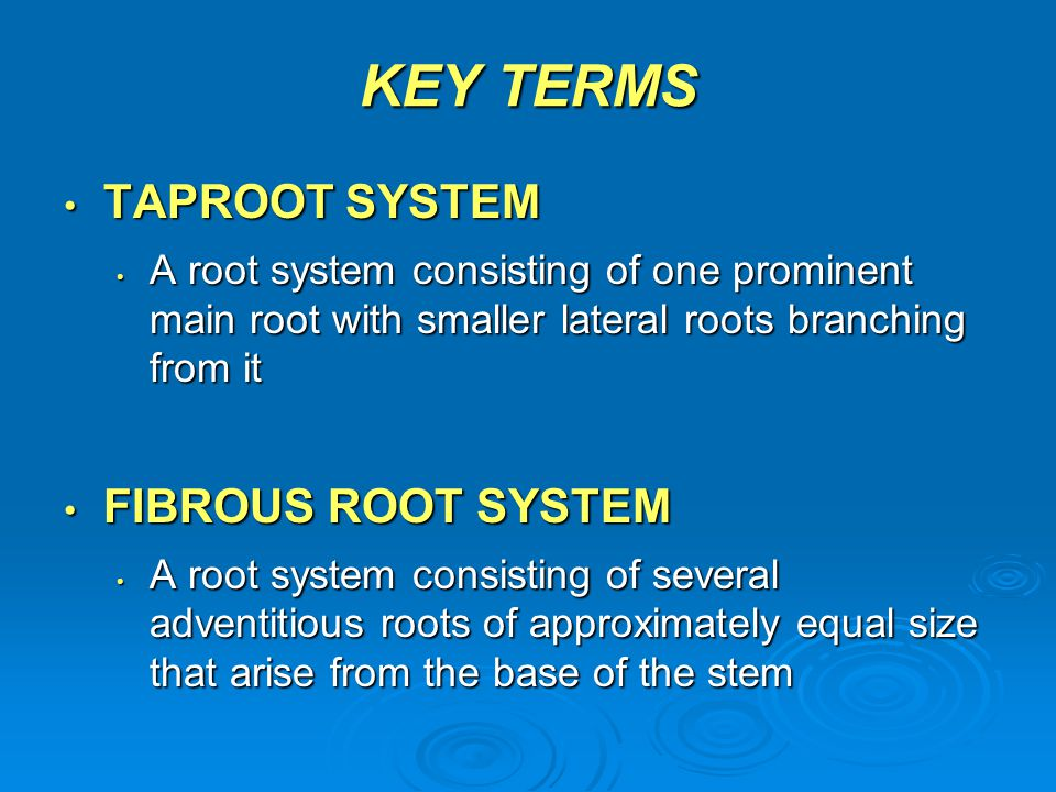 KEY TERMS TAPROOT SYSTEM TAPROOT SYSTEM A root system consisting of one prominent main root with smaller lateral roots branching from it A root system