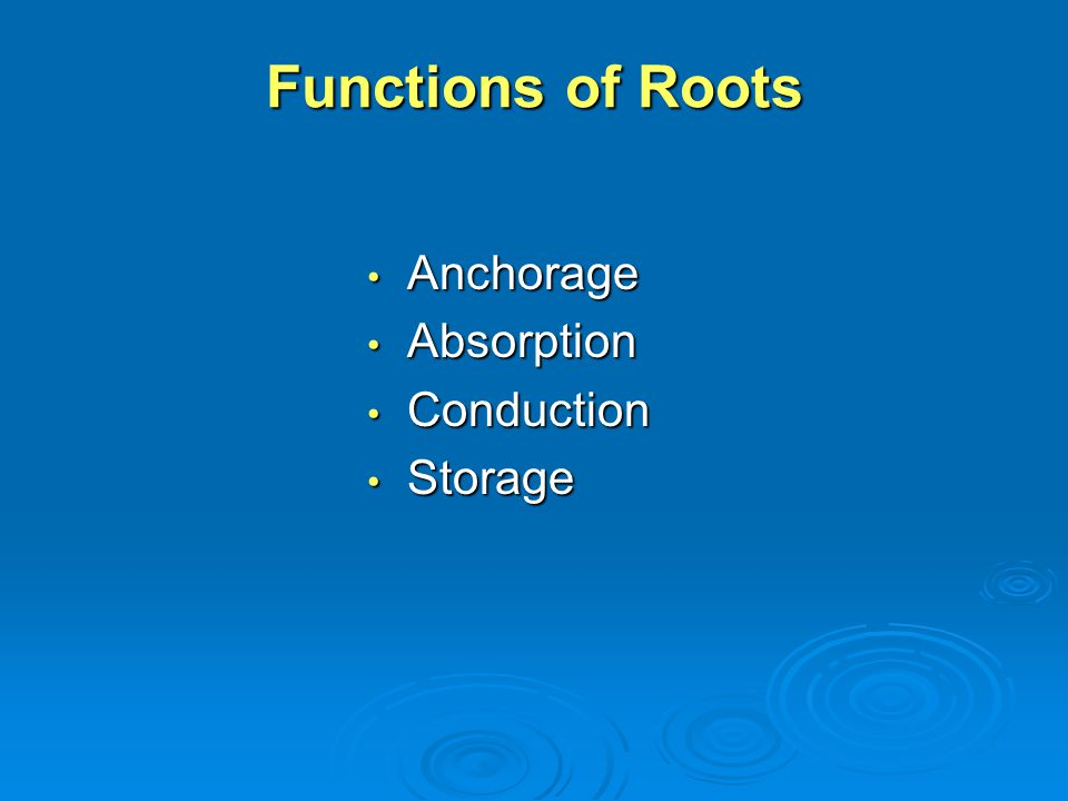 Functions of Roots Anchorage Anchorage Absorption Absorption Conduction Conduction Storage Storage