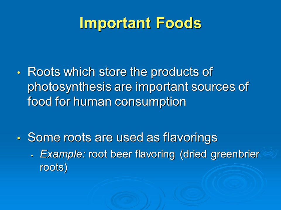 Important Foods Roots which store the products of photosynthesis are important sources of food for human consumption Roots which store the products of