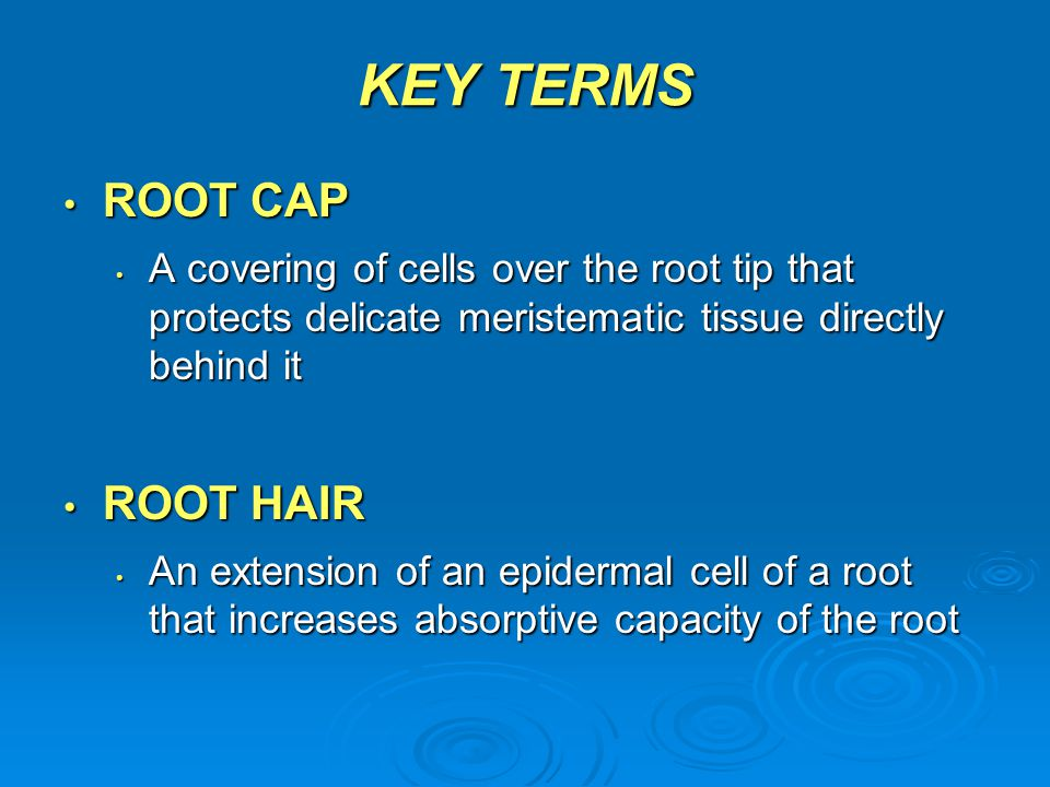 Animation: Root Systems CLICK TO PLAY