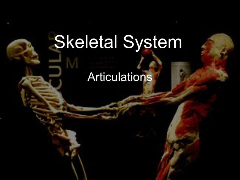Skeletal System Articulations