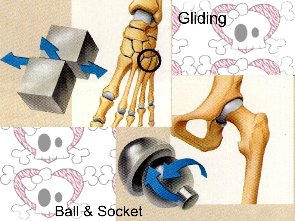 Gliding Ball & Socket