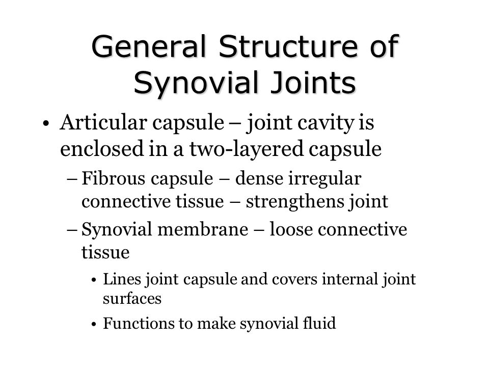 General Structure of Synovial Joints Articular capsule – joint cavity is enclosed in a two-layered capsule –Fibrous capsule – dense irregular connecti
