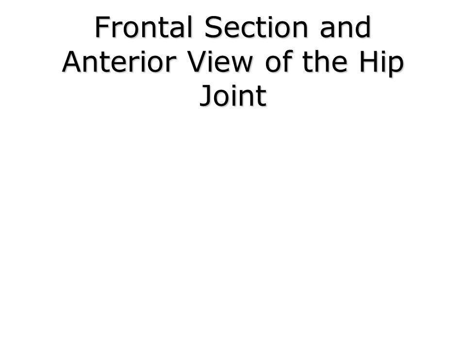 Frontal Section and Anterior View of the Hip Joint