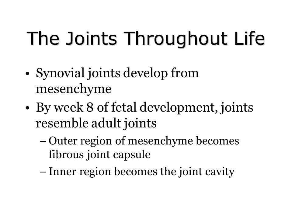 The Joints Throughout Life Synovial joints develop from mesenchyme By week 8 of fetal development, joints resemble adult joints –Outer region of mesen