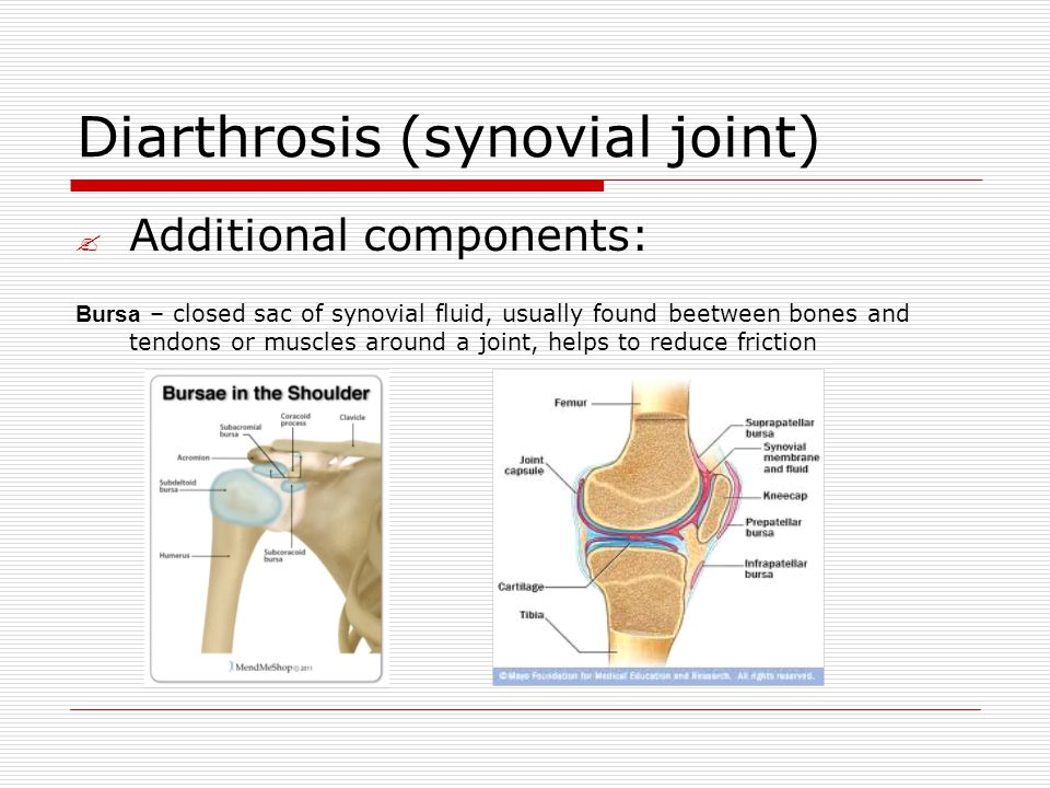 Diarthrosis (synovial joint)  Additional components: Bursa – closed sac of synovial fluid, usually found beetween bones and tendons or muscles around a joint, helps to reduce friction