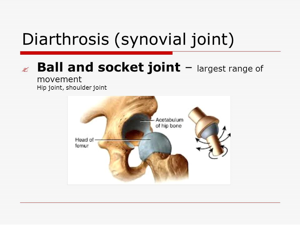 Diarthrosis (synovial joint)  Ball and socket joint – largest range of movement Hip joint, shoulder joint