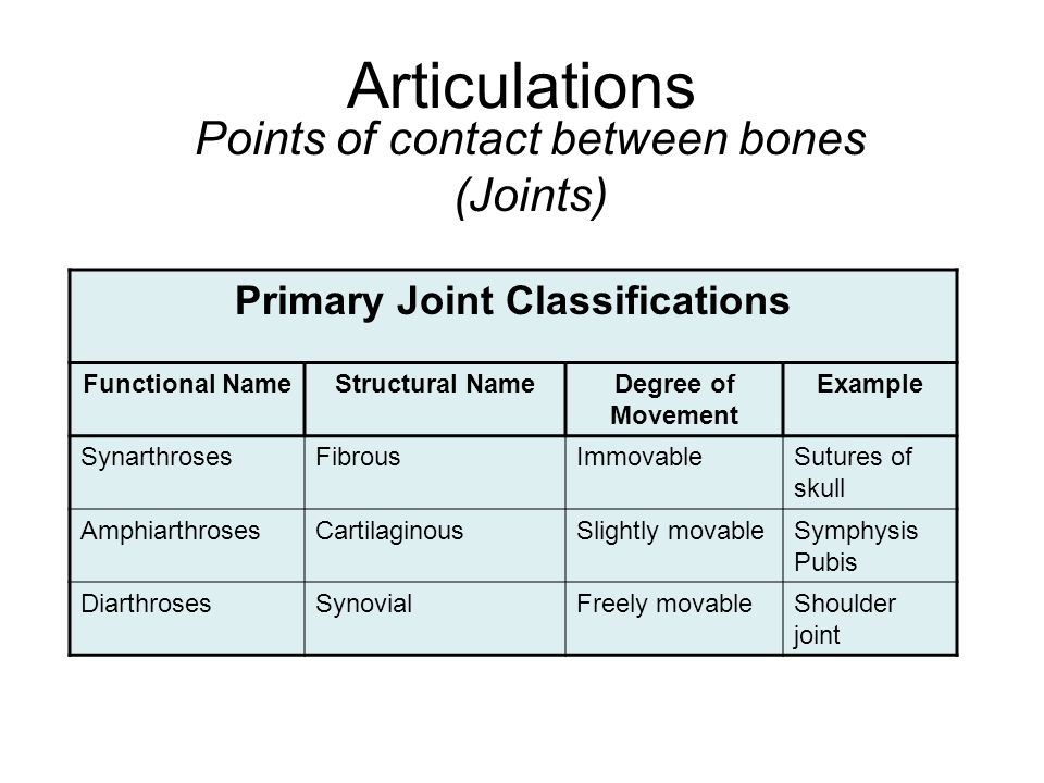Articulations Points of contact between bones (Joints) Primary Joint Classifications Functional NameStructural NameDegree of Movement Example SynarthrosesFibrousImmovableSutures of skull AmphiarthrosesCartilaginousSlightly movableSymphysis Pubis DiarthrosesSynovialFreely movableShoulder joint