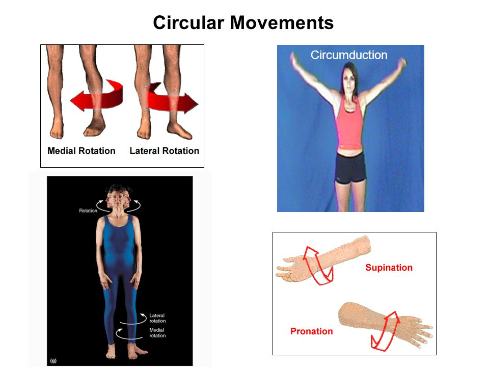 Circular Movements Circumduction