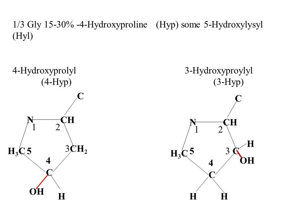 1/3 Gly 15-30% -4-Hydroxyproline (Hyp) some 5-Hydroxylysyl (Hyl) 4-Hydroxyprolyl 3-Hydroxyproylyl (4-Hyp)(3-Hyp) C CH 2 H3CH3C NCH C C H3CH3C N 1 2 2 1 3 3 OH C C H 4 4 HHH 55