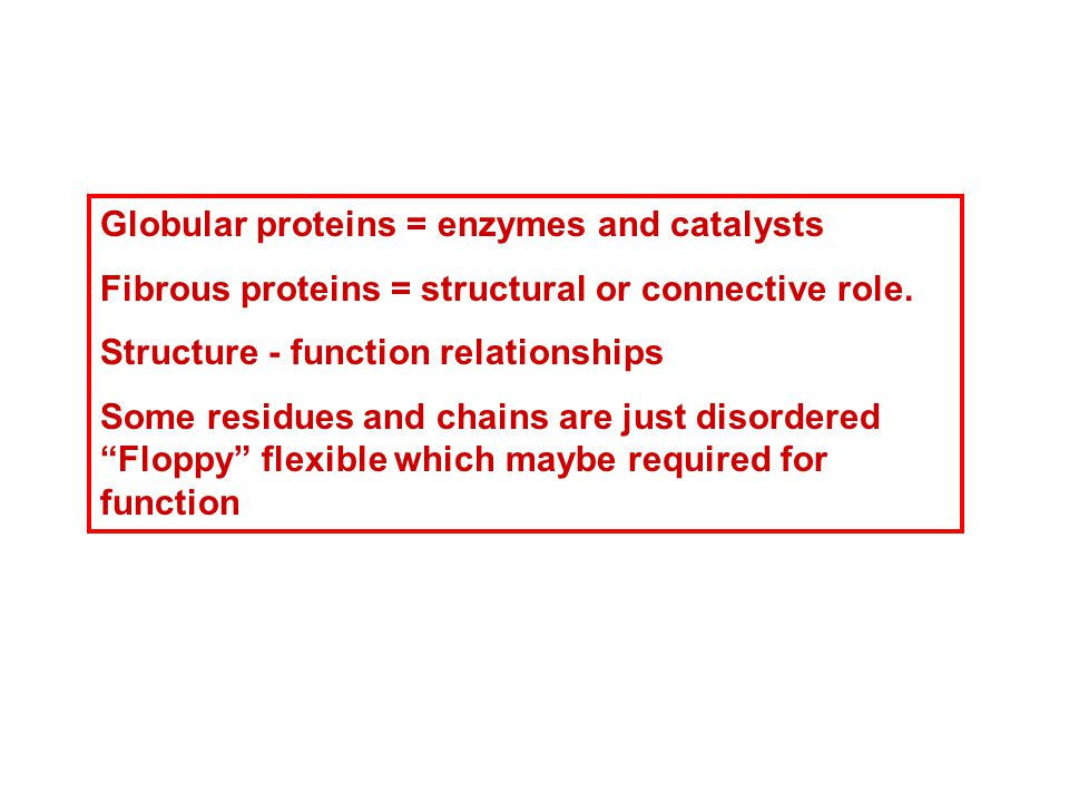 Globular proteins = enzymes and catalysts Fibrous proteins = structural or connective role.