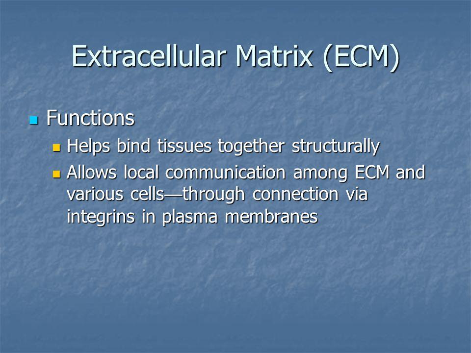 I.Stratified epithelium 5. B.
