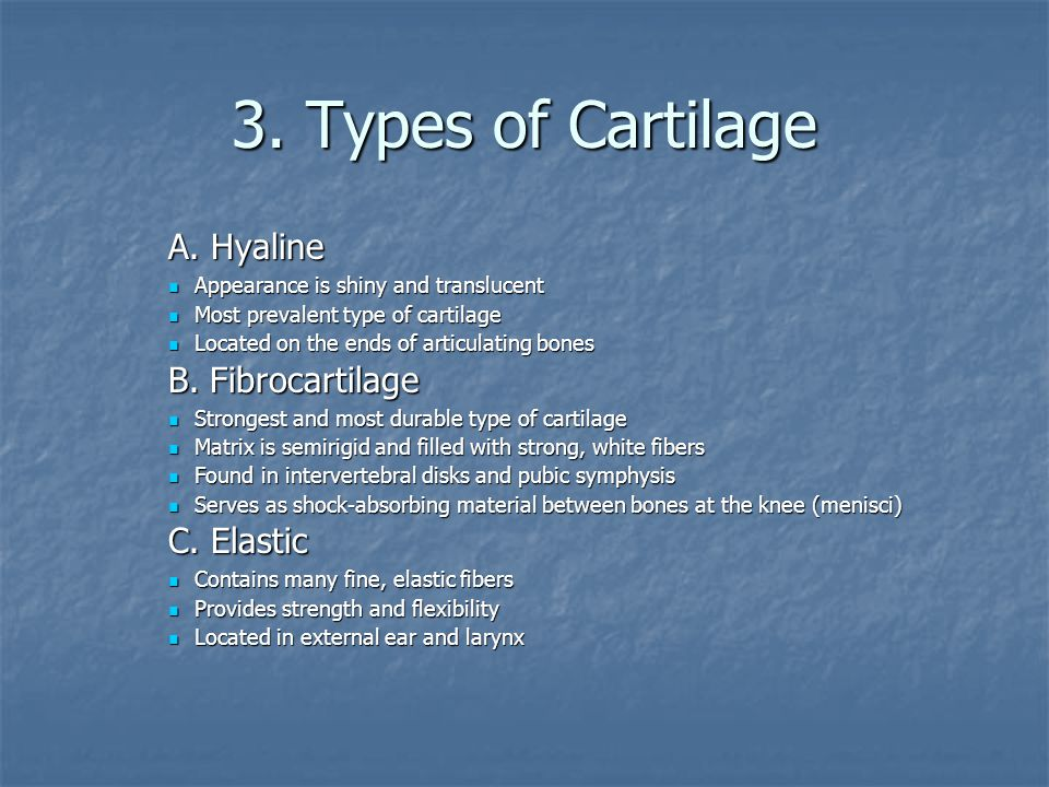 3. Types of Cartilage A. Hyaline Appearance is shiny and translucent Appearance is shiny and translucent Most prevalent type of cartilage Most prevale