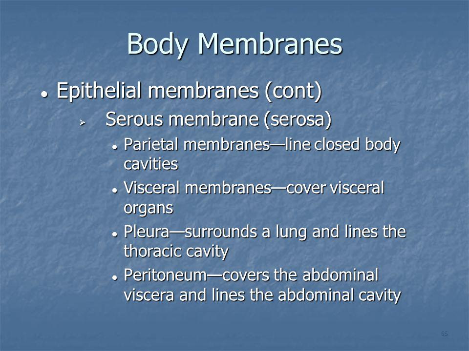 Body Membranes Epithelial membranes (cont) Epithelial membranes (cont)  Serous membrane (serosa) Parietal membranes—line closed body cavities Parieta