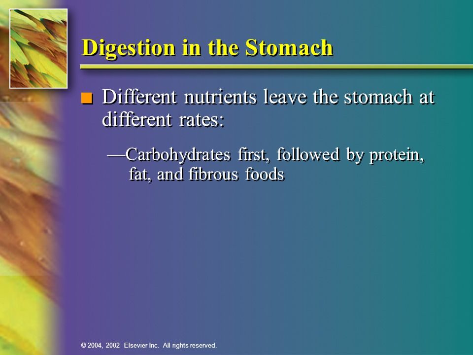 © 2004, 2002 Elsevier Inc. All rights reserved. Digestion in the Stomach n Different nutrients leave the stomach at different rates: —Carbohydrates fi