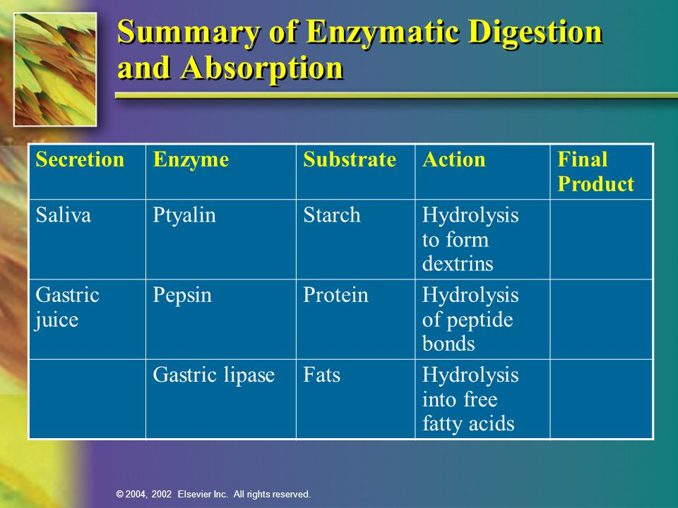 © 2004, 2002 Elsevier Inc. All rights reserved. Summary of Enzymatic Digestion and Absorption SecretionEnzymeSubstrateActionFinal Product SalivaPtyali