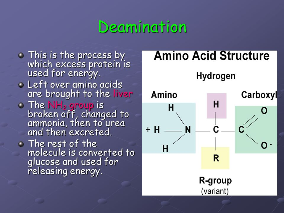 Deamination This is the process by which excess protein is used for energy. Left over amino acids are brought to the liver The NH 2 group is broken of