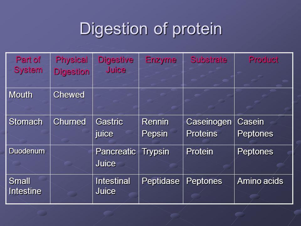 Digestion of protein Part of System PhysicalDigestion Digestive Juice EnzymeSubstrateProduct MouthChewed StomachChurnedGastricjuiceRenninPepsinCaseino